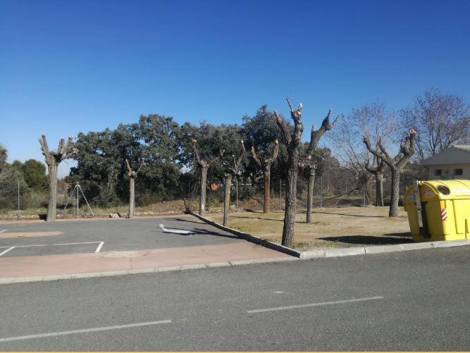 Termina la campaña de poda en Nambroca, que ha llegado a más de 500 árboles